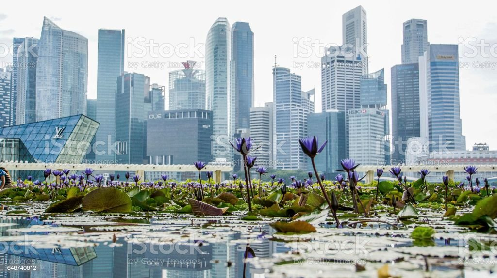 City on Bloom stock photo