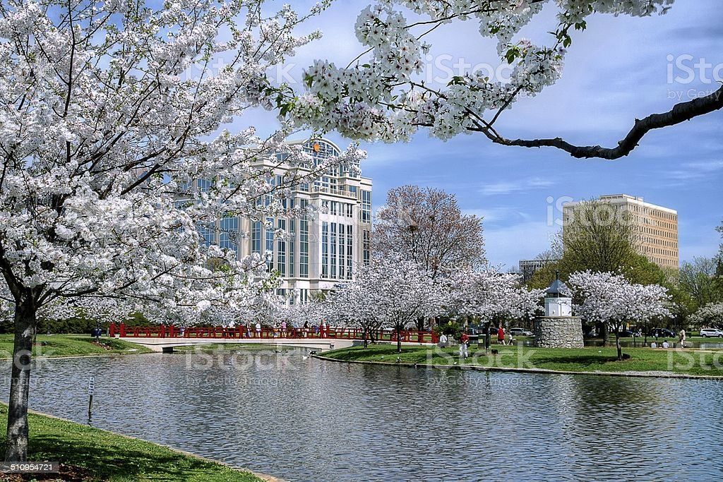 City Park During Spring stock photo