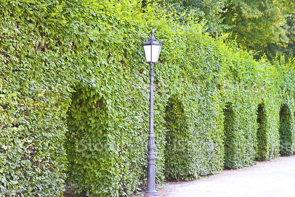 City Park Hedge Maze royalty-free stock photo