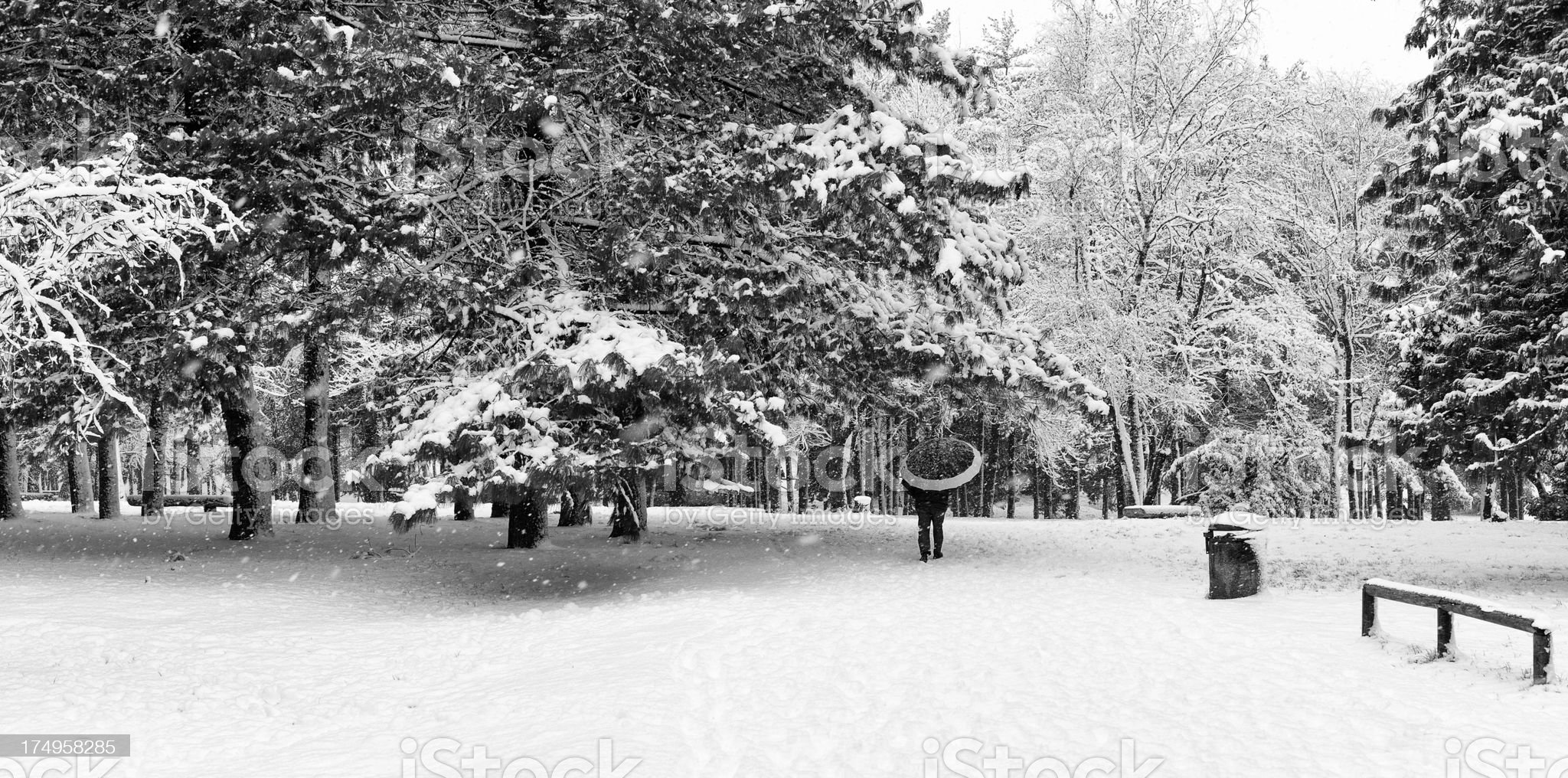 City Park in winter. Black and White royalty-free stock photo