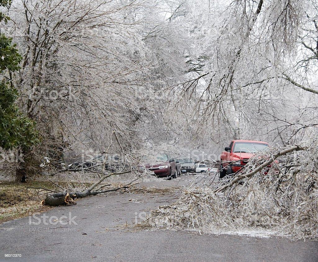 City Street Blocked by Down Trees royalty-free stock photo
