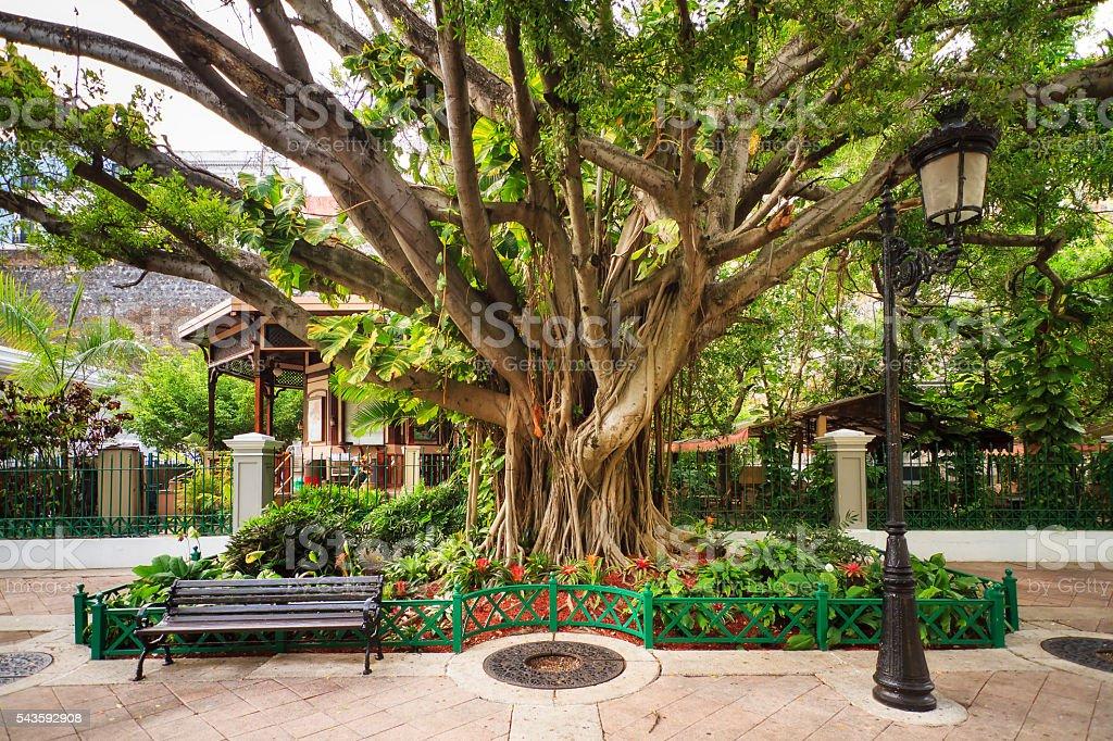 City tree San Juan stock photo
