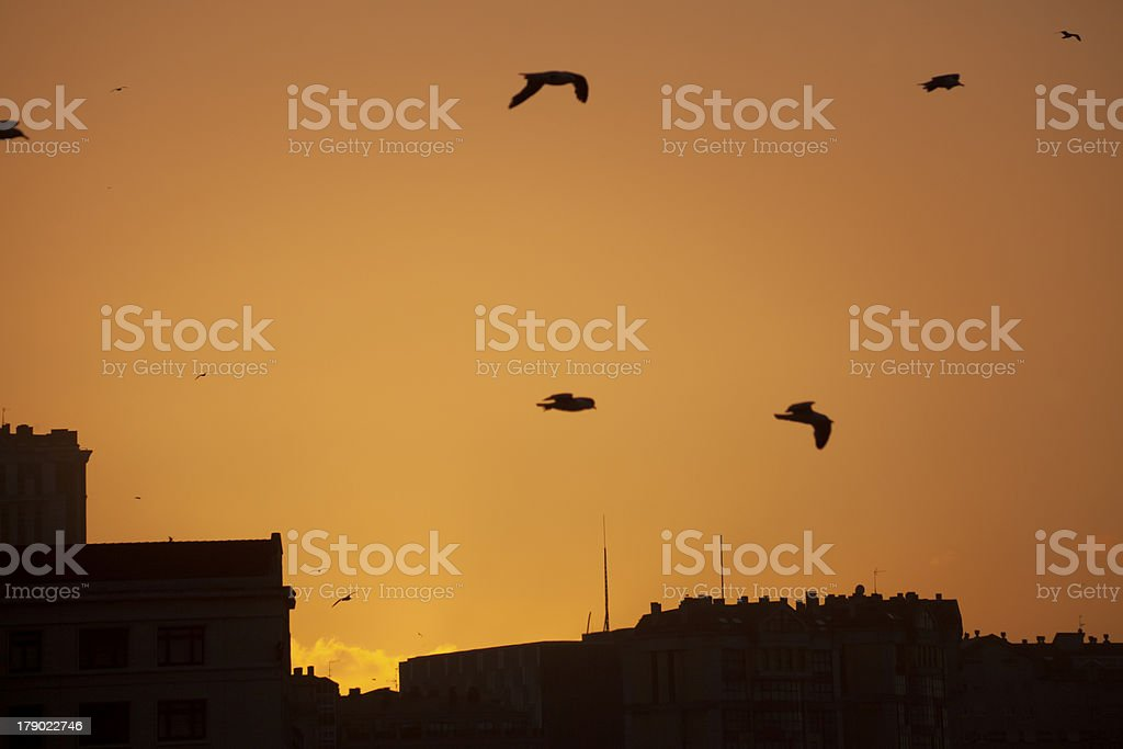 City view and seagulls royalty-free stock photo