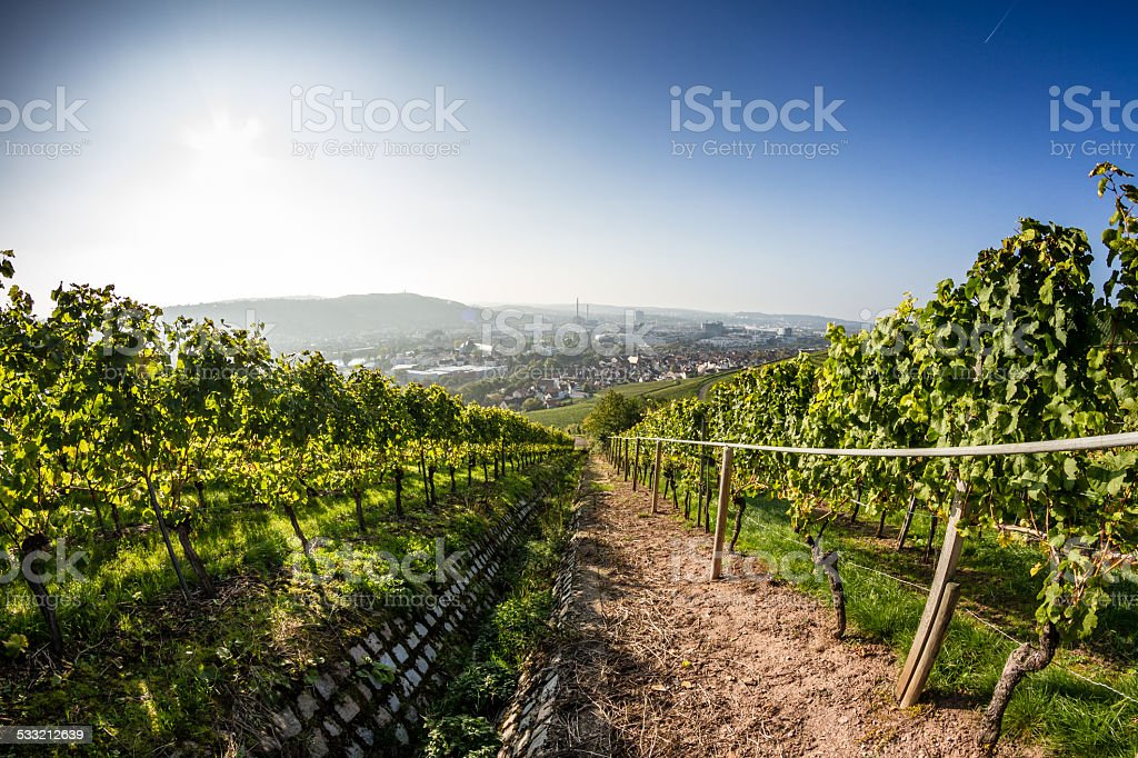 City Vineyard (1) stock photo