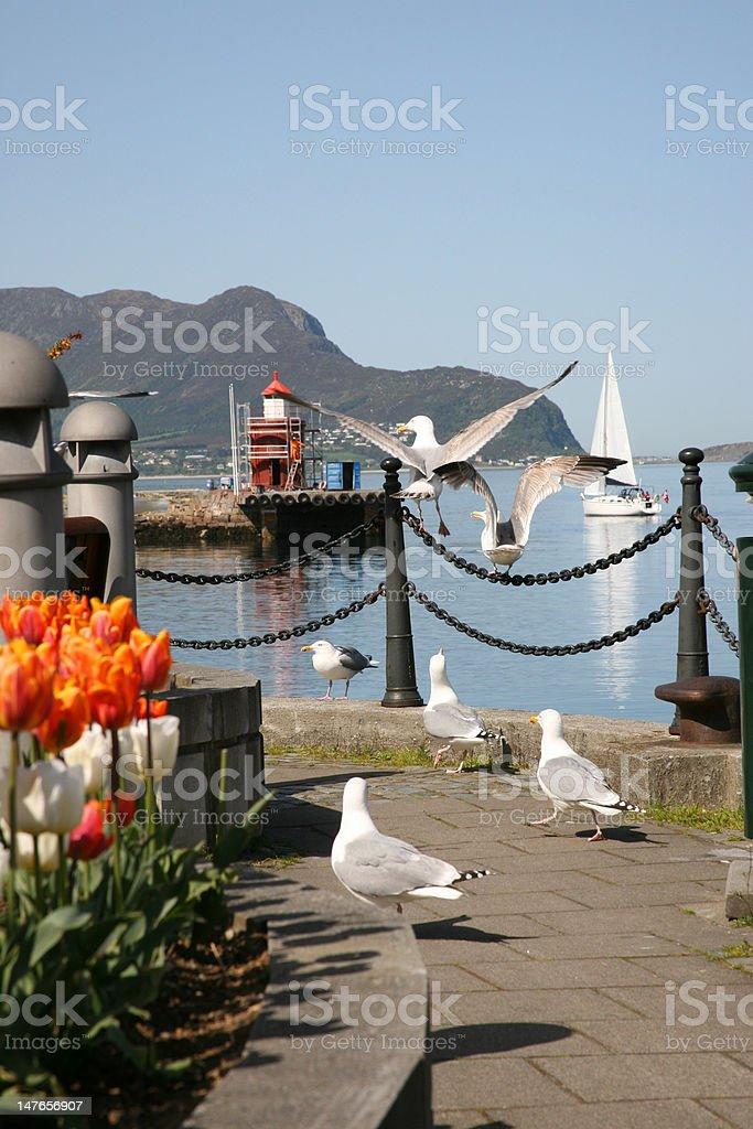 Citylife in Alesund, Norway royalty-free stock photo