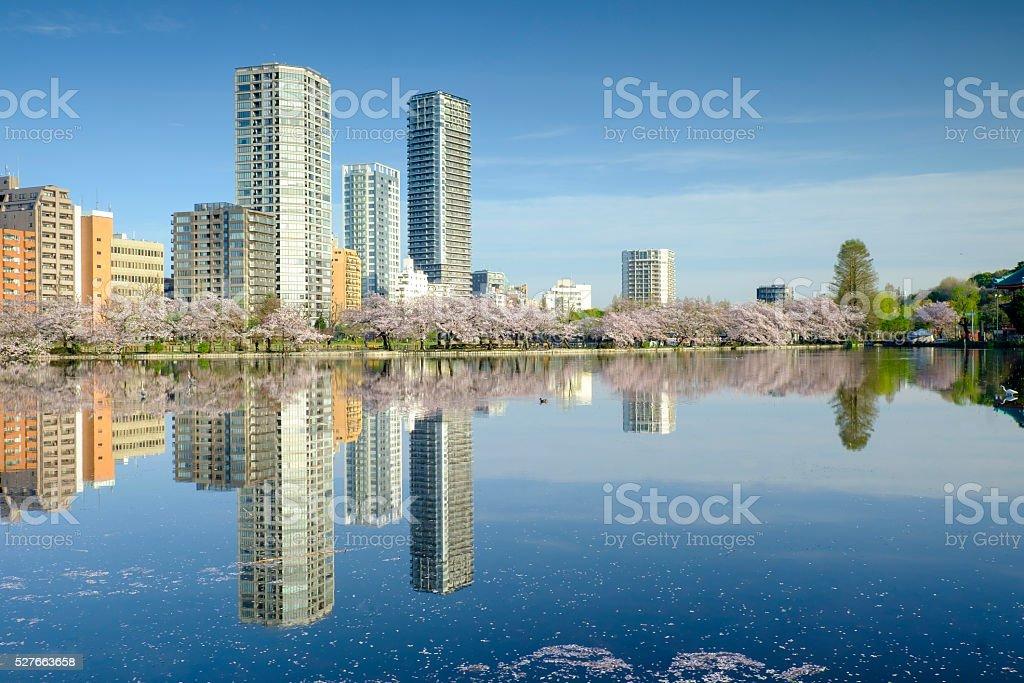 cityscape with sakura blossom view stock photo