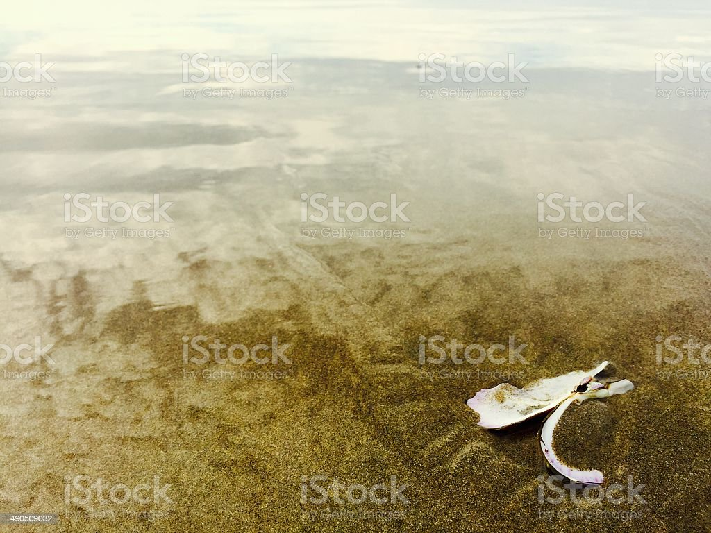 Clam on a sandy shore as waves recede royalty-free stock photo