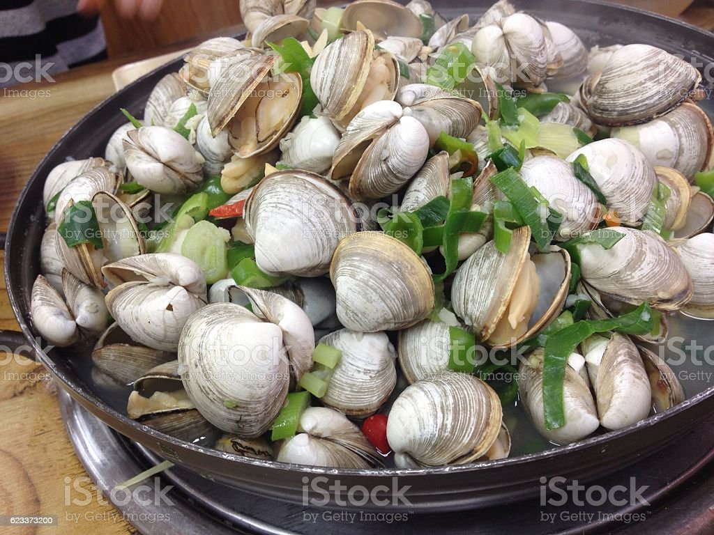 clam stock photo