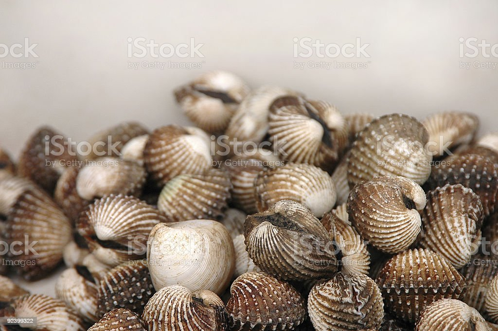 Clam (Bivalve). Sea food royalty-free stock photo