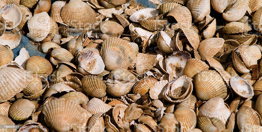 Clam shells royalty-free stock photo