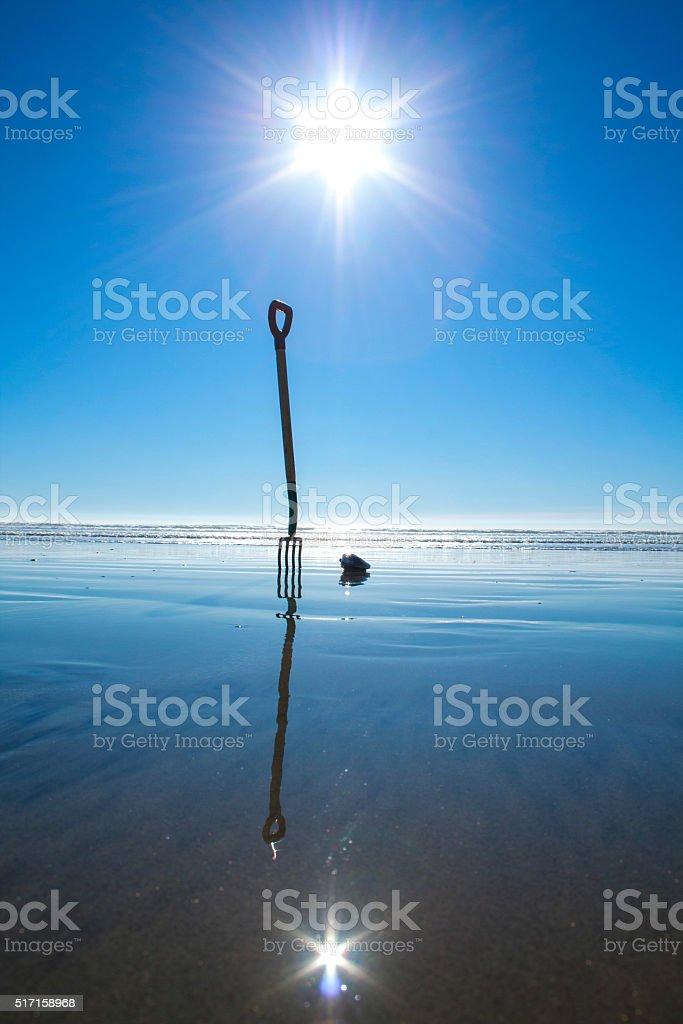 Clamming na plaży w słoneczny dzień jasny zbiór zdjęć royalty-free