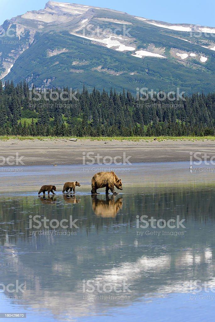 Clamming on the Coastline of Lake Clark National Park stock photo