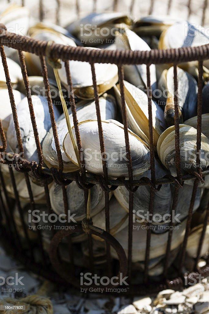 Clams and Quahogs stock photo