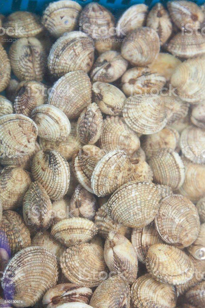 clams at an Italian fish market stock photo