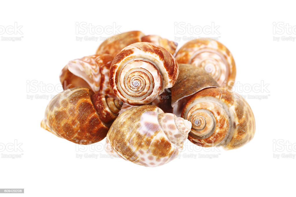clams isolated on white stock photo