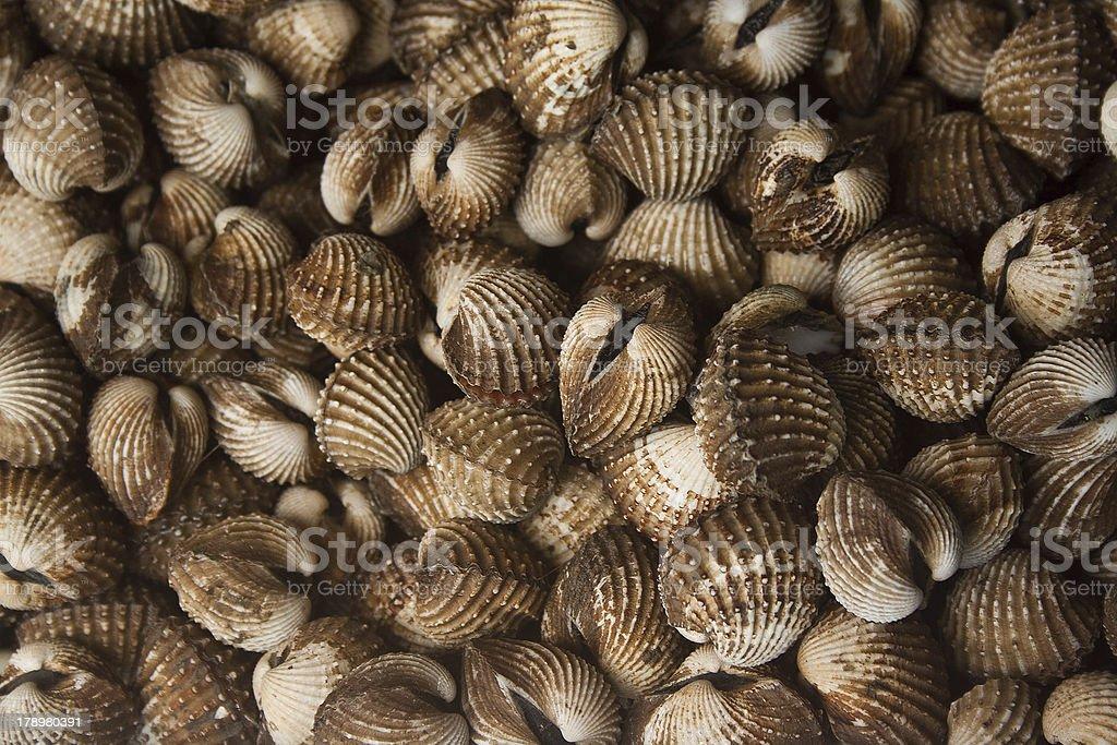 clams mollusk stock photo