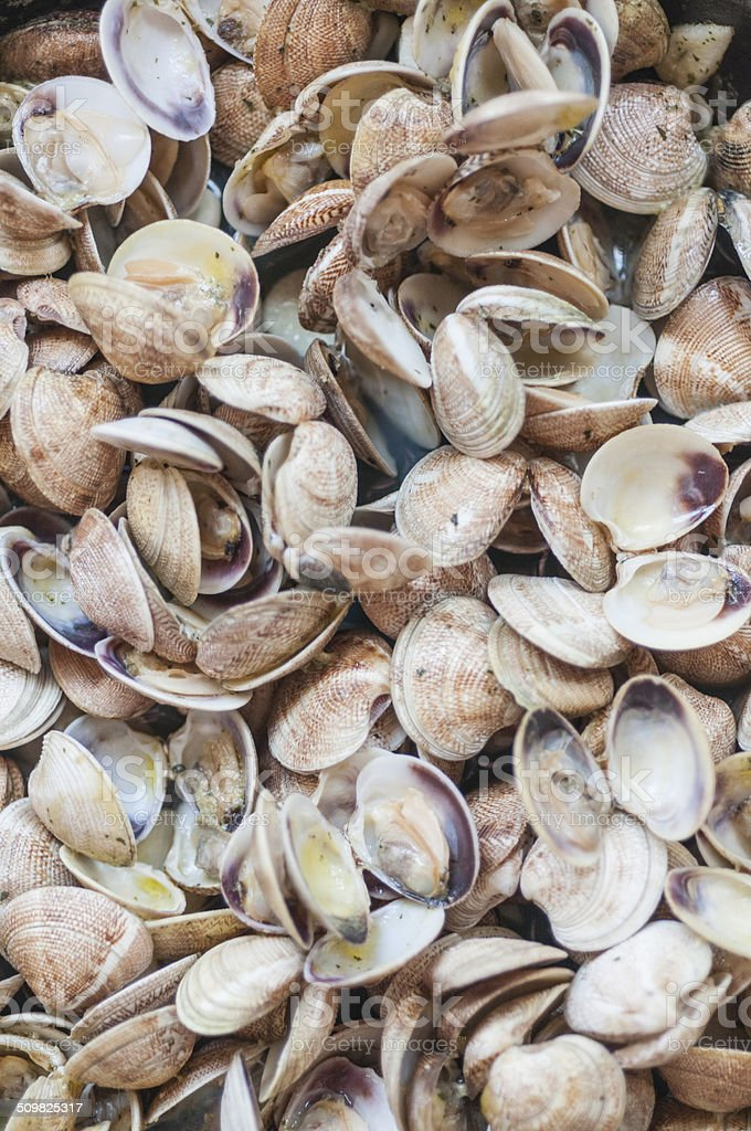 Clams stock photo