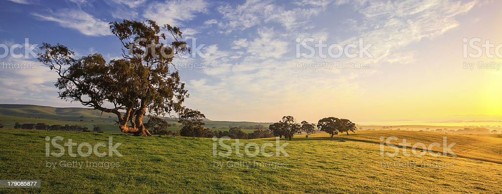 Clare Field royalty-free stock photo