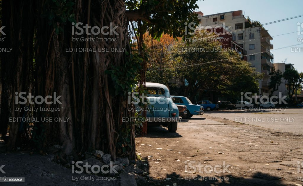 Classic American cars parked in a dirt lot next to a large banyan tree in Cuba stock photo
