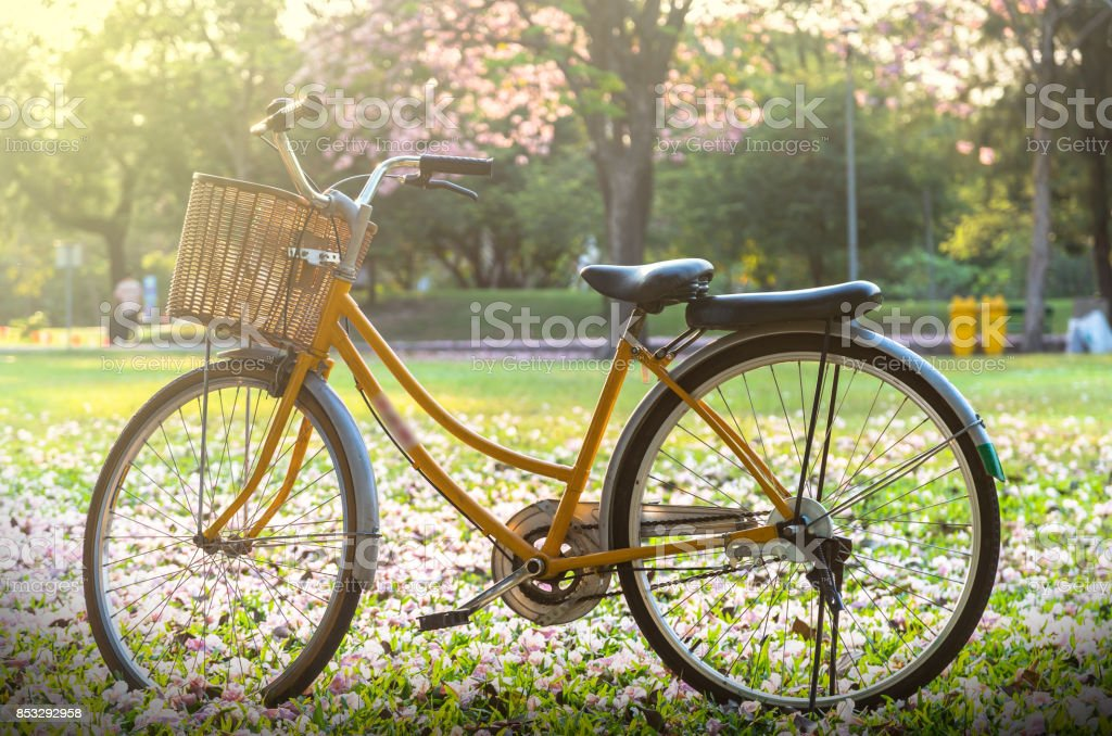 Classic Bicycle at sunset in the park or deep forest stock photo