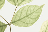classic color leaves on mulberry paper texture