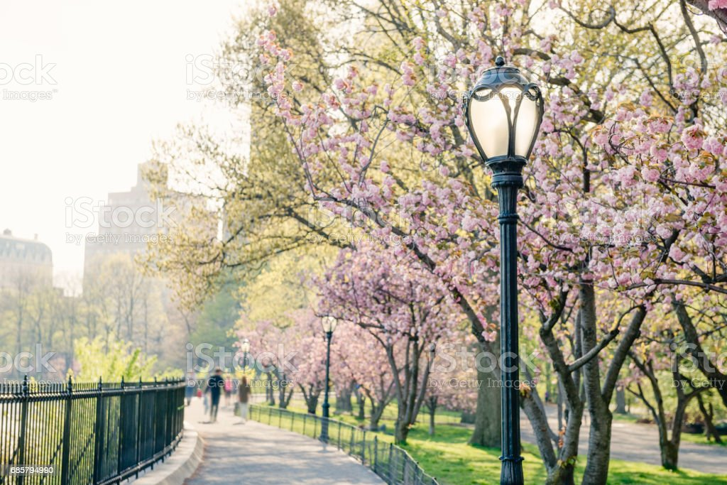 Classic NYC Central Park Lampost Detail with Spring Cherry Blossoms stock photo