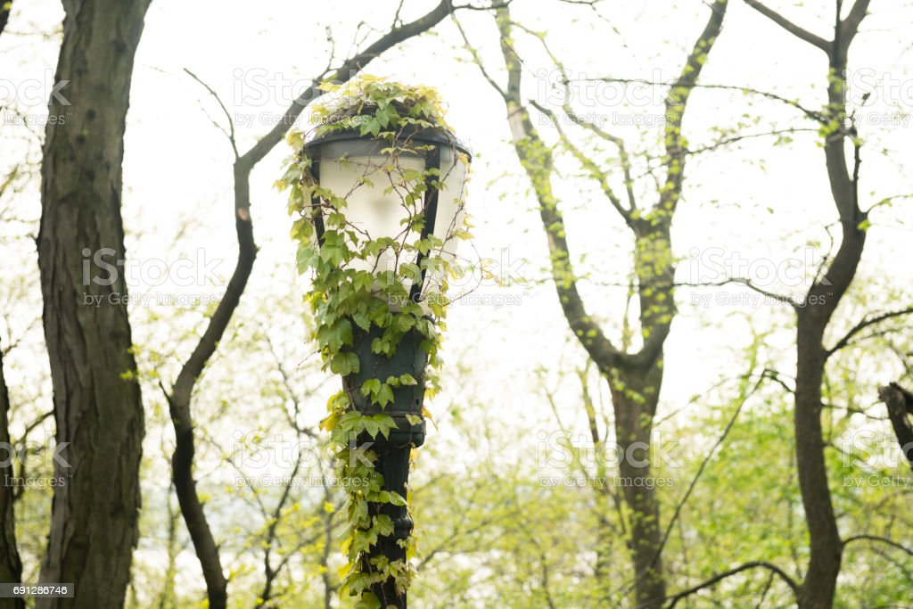 Classic NYC Riverside Park Lampost Detail with Green Ivy stock photo