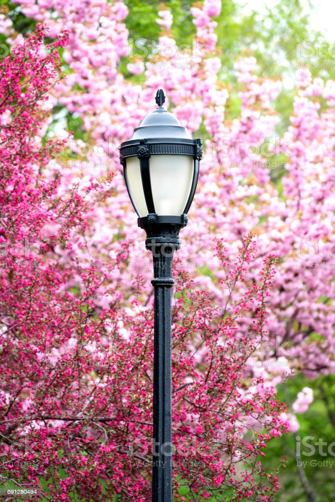 Classic NYC Riverside Park Lampost Detail with Spring Cherry Blossoms stock photo