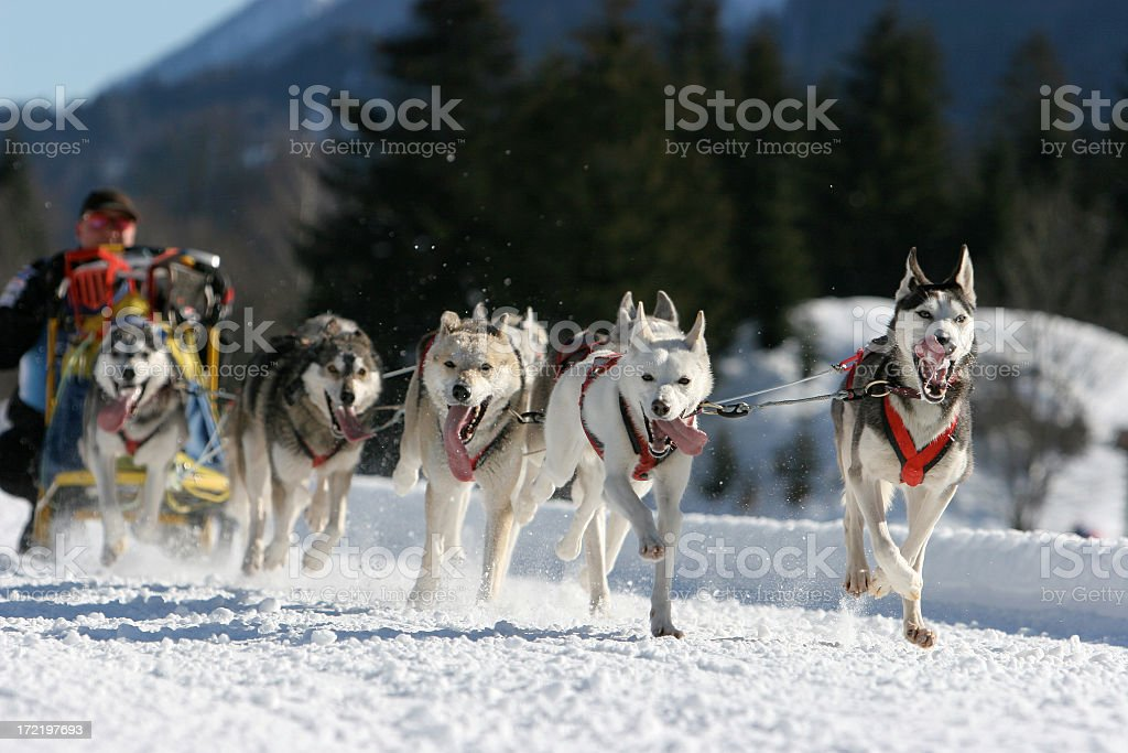 Classic sled stock photo