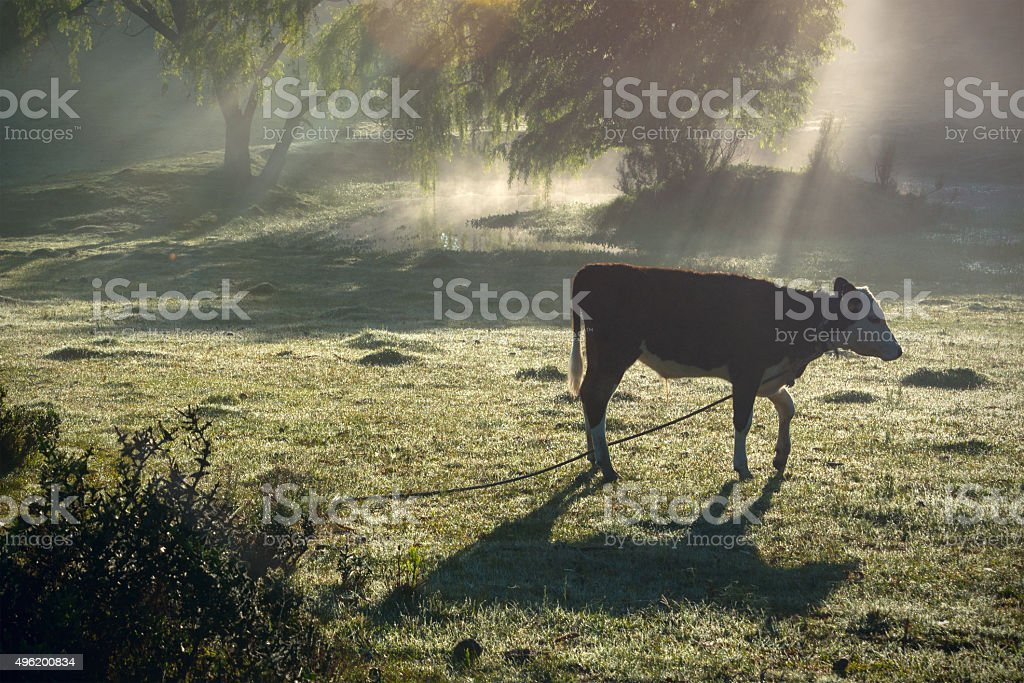 Classic view countryside in Uruguay stock photo