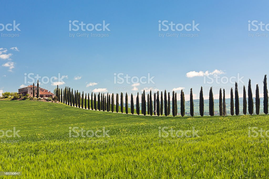 Classic view of Tuscan farmhouse, green field and cypress trees royalty-free stock photo
