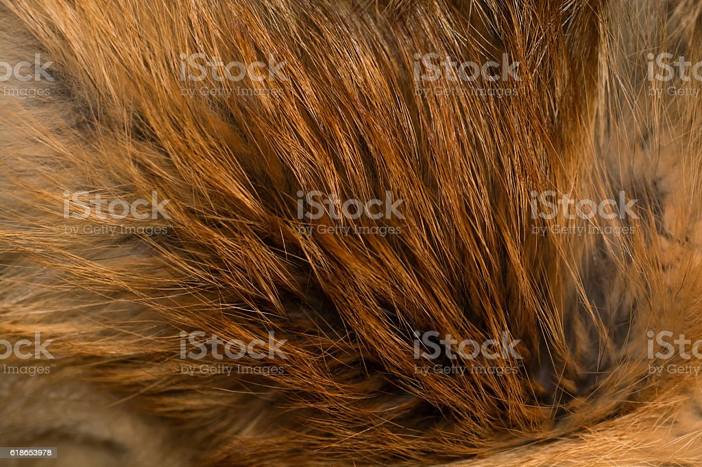Classy and luxurious red fox fur stock photo
