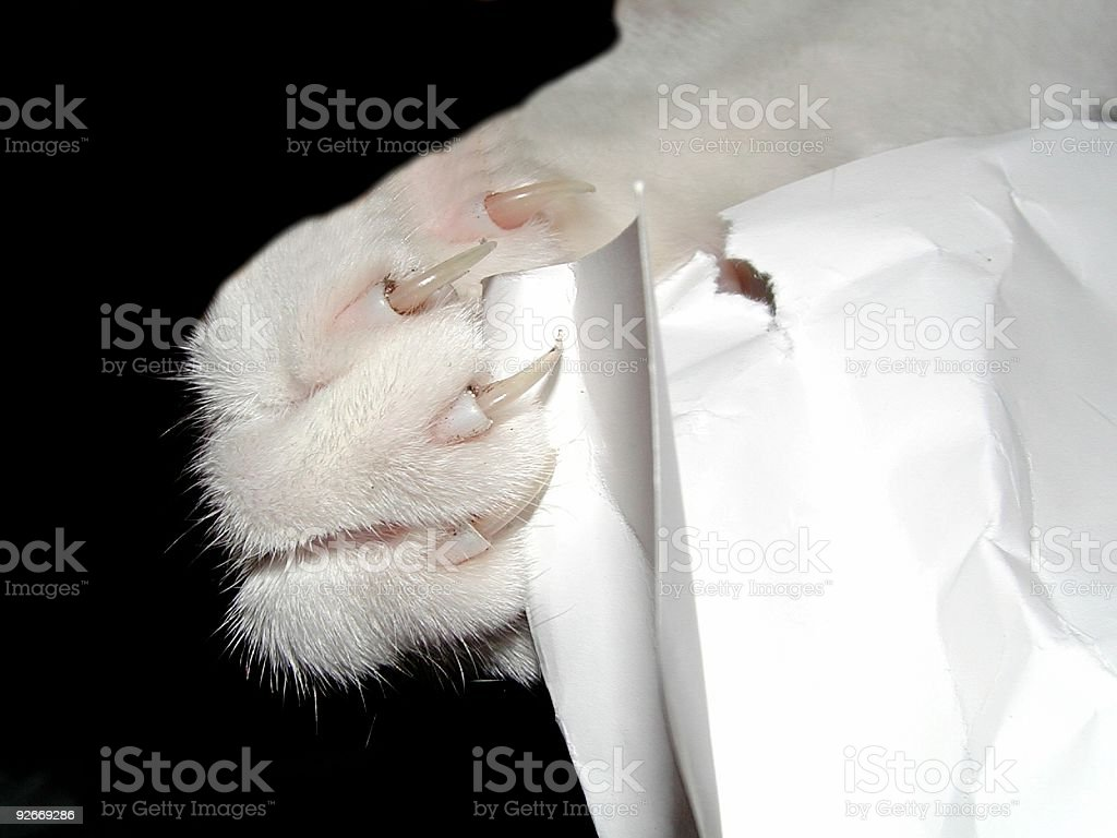 Claws 2 royalty-free stock photo