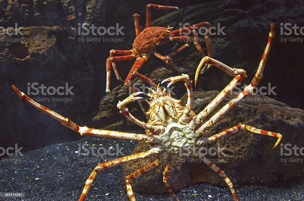 Claws Giant Crab stock photo