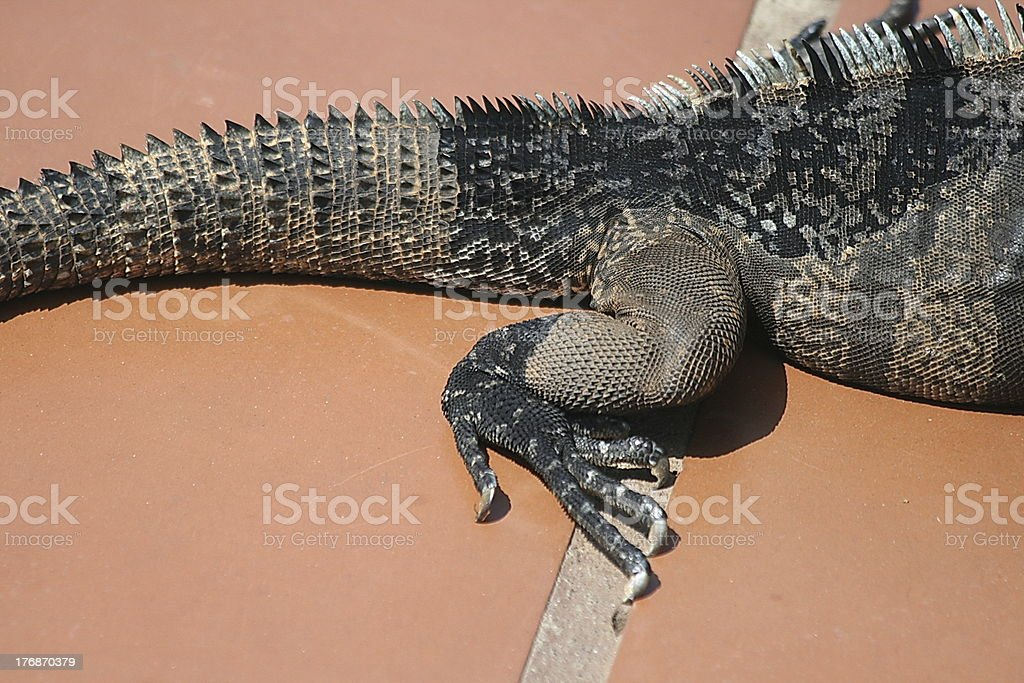 claws royalty-free stock photo