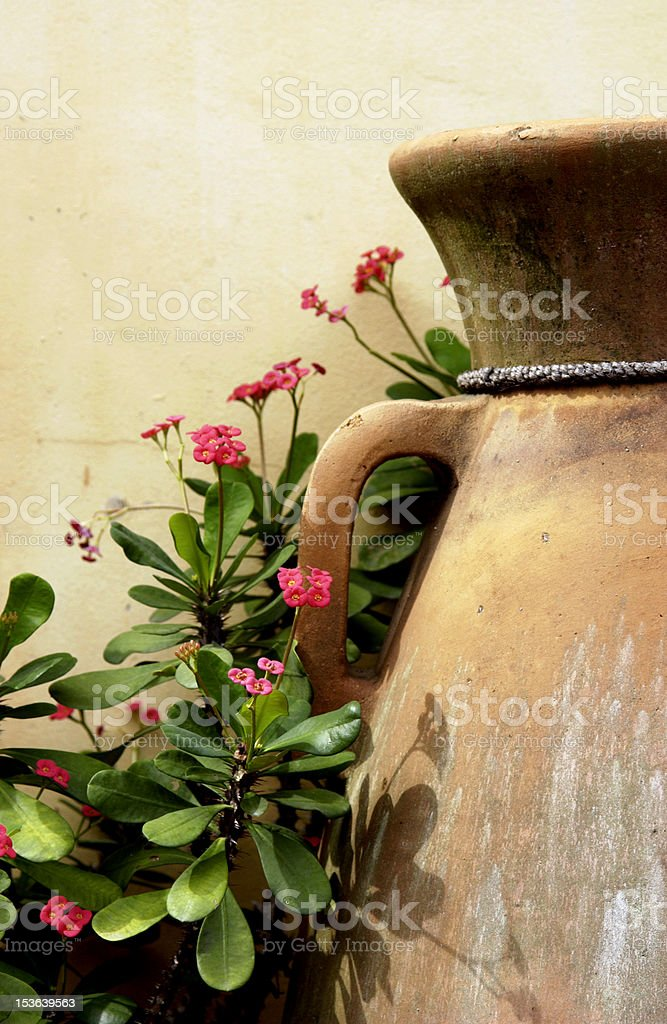 Clay pots amd flowers royalty-free stock photo