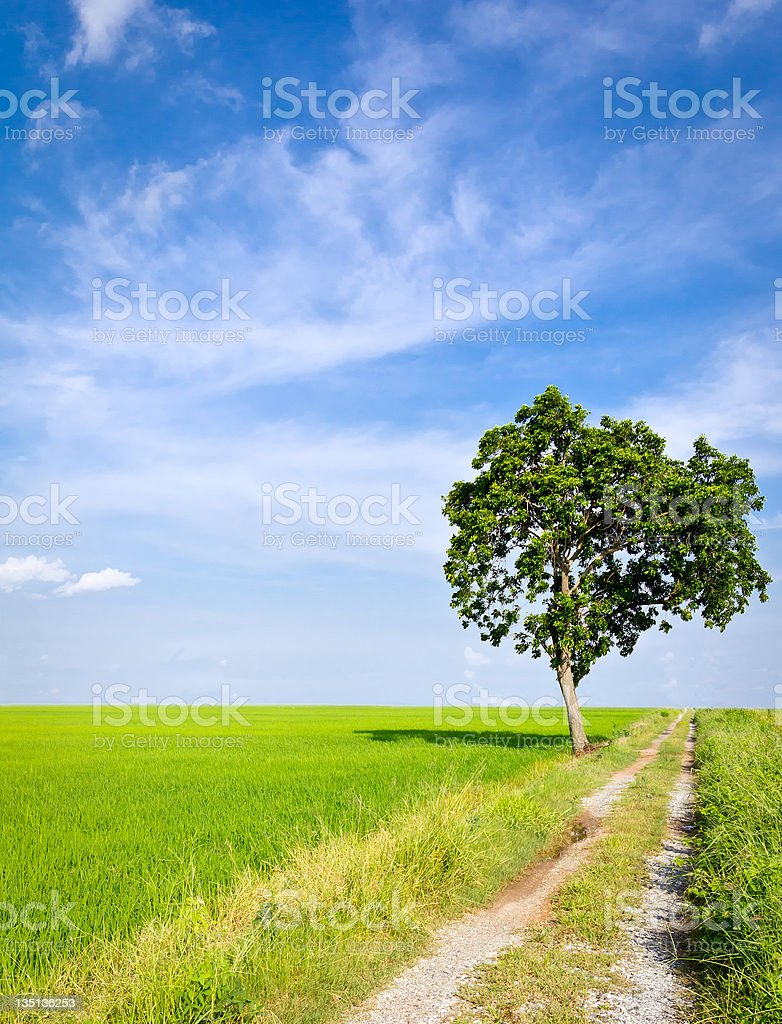 clay road a paddy campo foto stock royalty-free