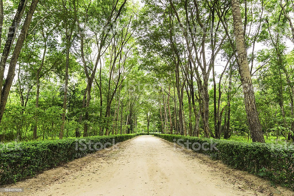 clay road nel parco nazionale foto stock royalty-free
