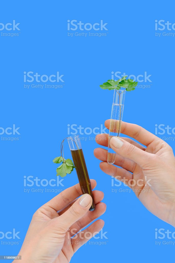 Clean and dirty water samples with fresh ,wilted leaves royalty-free stock photo