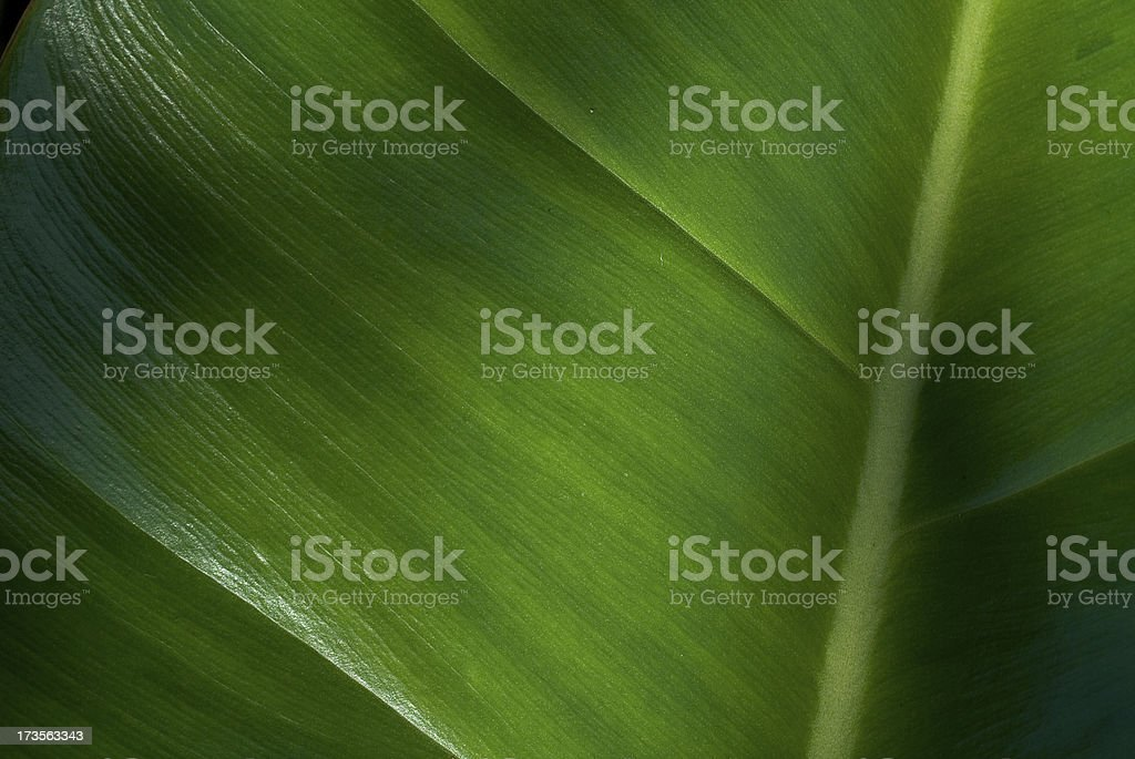 Clean and green stock photo