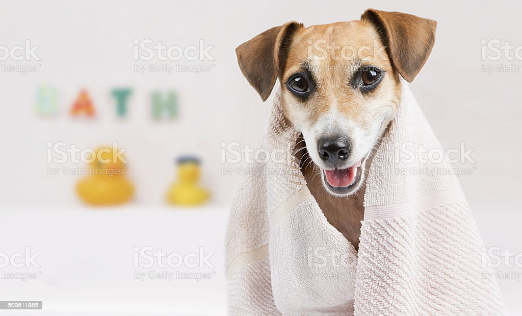 Clean pet spa stock photo