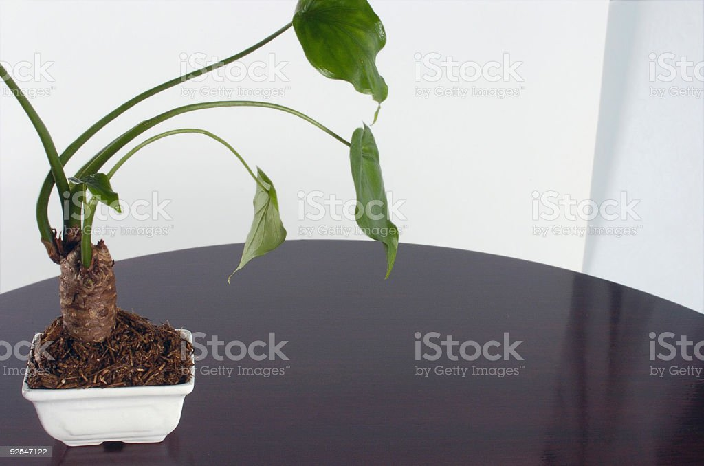 Clean Table royalty-free stock photo