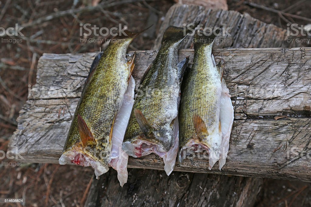 Cleaned Bass stock photo