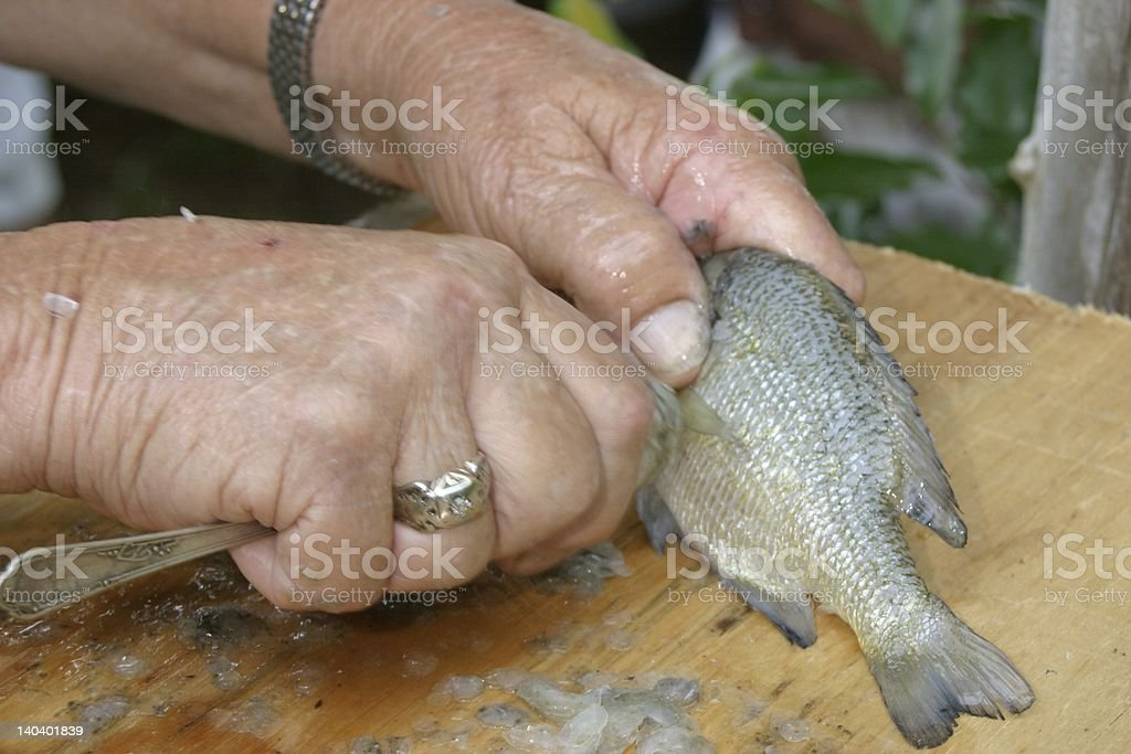 Cleaning A Fish stock photo