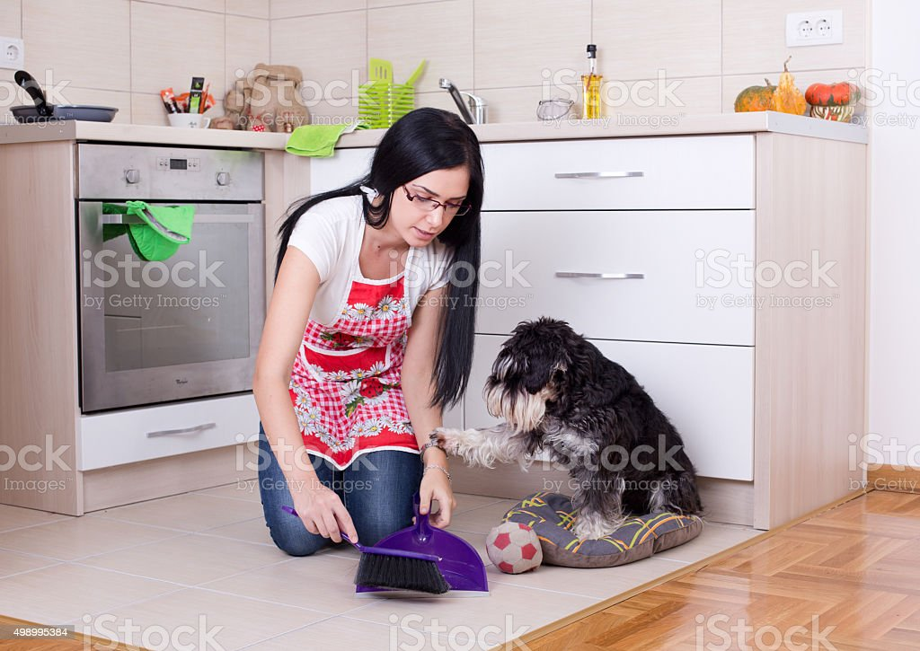 Cleaning after dog in the kitchen stock photo