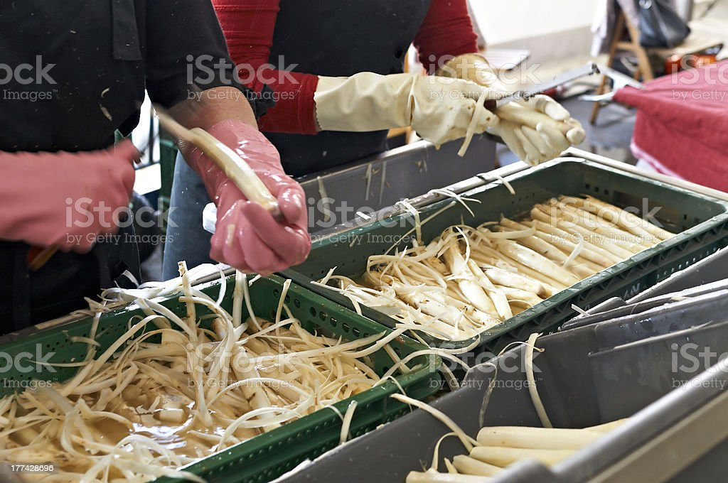 Cleaning asparagus royalty-free stock photo