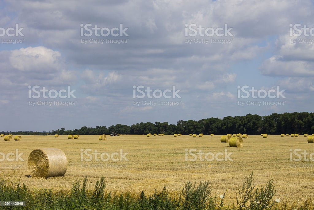 Cleaning of hay in a field stock photo