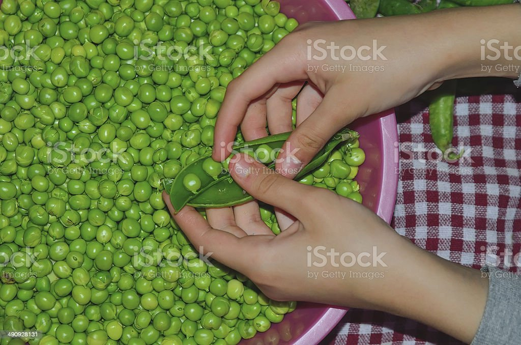 Cleaning peas royalty-free stock photo