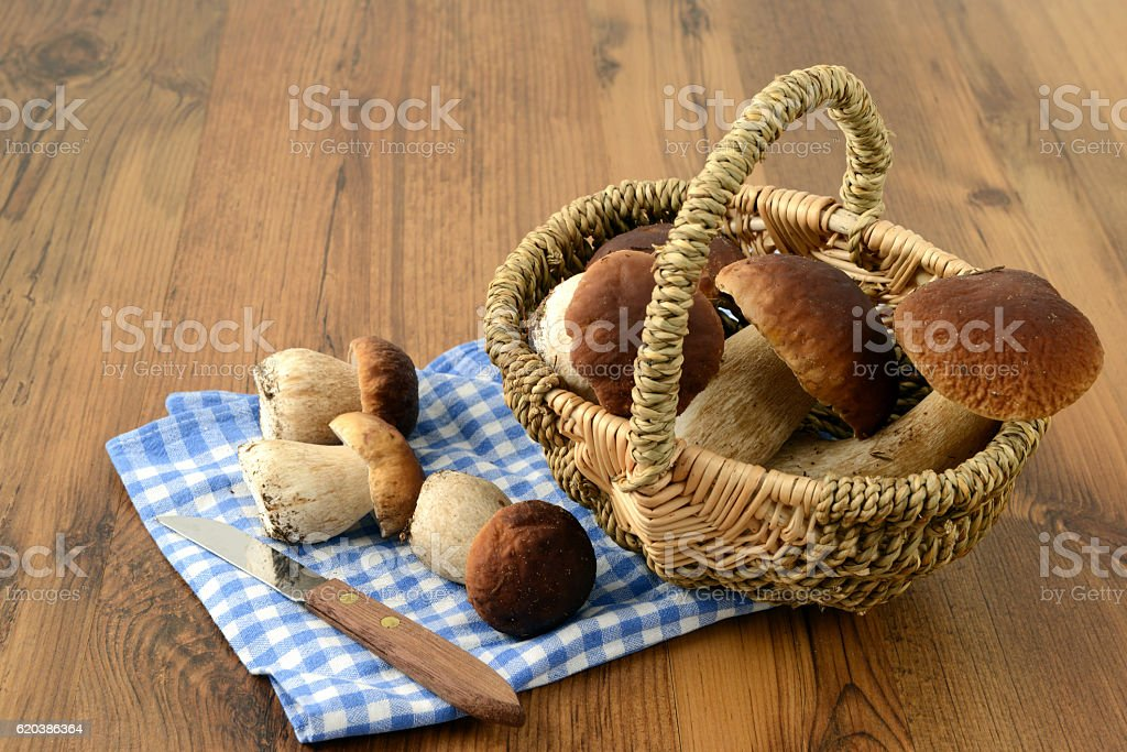cleaning penny bun mushrooms stock photo