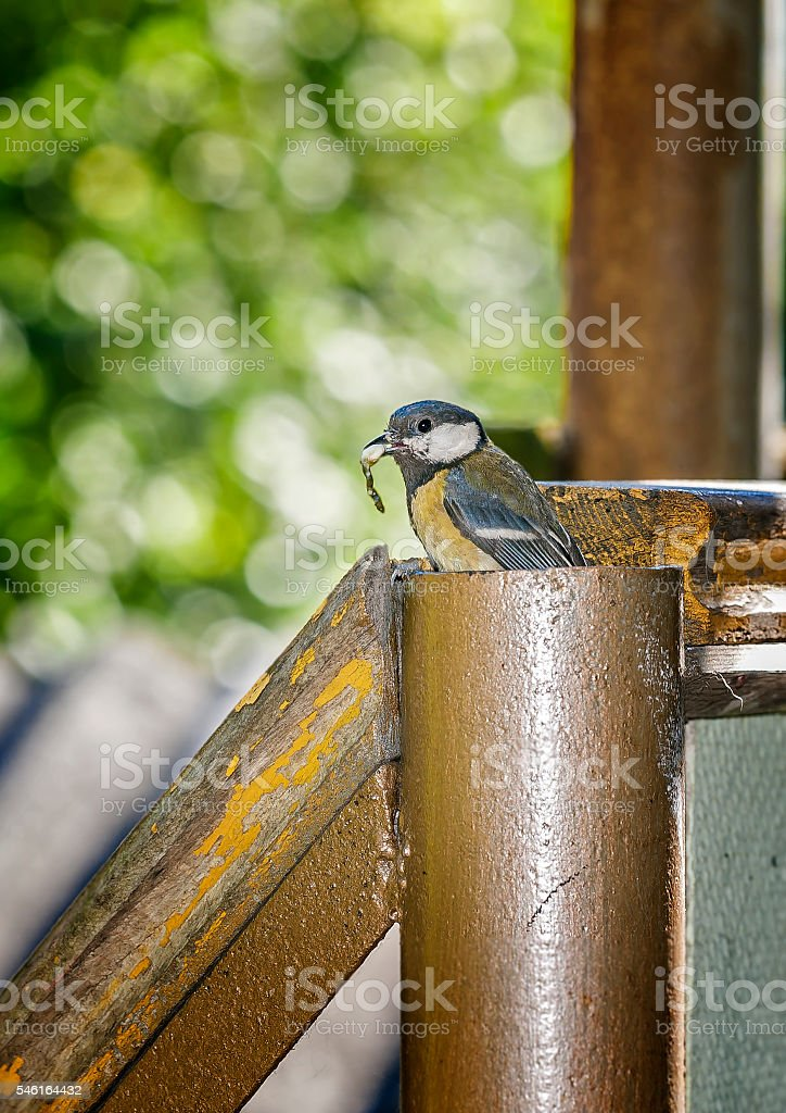 Cleaning residential area. stock photo